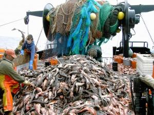 דיג מסחרי. הורג את האוקיינוסים